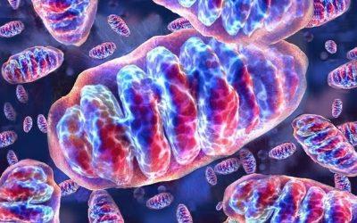 """El Dr. Roni Moya impartirá la ponencia """"Terapia Celular Mitocondrial en la Práctica Antienvejecimiento"""" en nuestro XIX Congreso de Medicina Estética y Antienvejecimiento"""